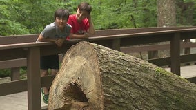 Georgia brothers raise money to bring 'dinosaur' to life in their neighborhood
