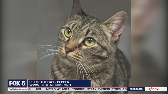 Pet of the day from Best Friends Animal Society