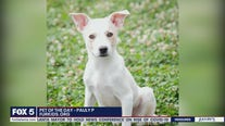 Pets of the Day from Furkids Atlanta
