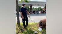 DeKalb County firefighters rescue dog trapped in hot car