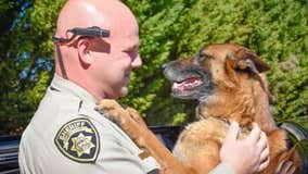 One of the southeast's most successful police K9s passes away at 14