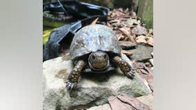 Johns Creek police searching for teens who allegedly stole turtles from nature preserve