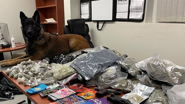 Police seize pounds of marijuana, various pills, three weapons in Union City
