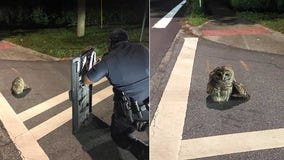 Decatur police officers help rescue injured owl
