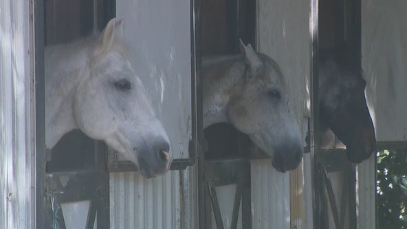 Buckhead group helps sex trafficking survivors through horse therapy