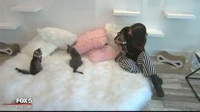 Sneak peek into nation's first pop-up kitten lounge in Georgetown