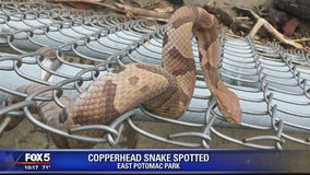 Copperhead snake spotted near National Mall