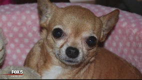 Montgomery County family mourning death of Chihuahua after it was attacked by pit bull