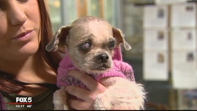 ANIMAL CRUELTY CASE: Dog with severely matted hair, infected eye found abandoned in Reston