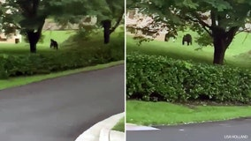 Bear spotted in Montgomery County