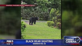 Black bear spotted in Warrenton neighborhood