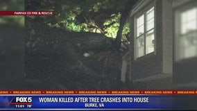 Woman killed after tree falls on house in Fairfax County