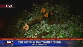 Fallen trees causing storm damage across DC region