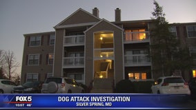 Woman attacked by dog in Silver Spring, police say