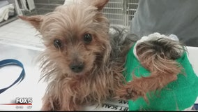 Dog nearly stabbed to death in Laurel adopted by new family