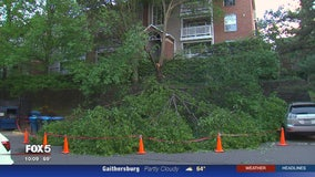 Large tree falls onto car with woman inside