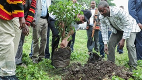 Ethiopia plants world-record 350 million trees in 12 hours, officials say