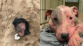 Dog rescued after being discovered buried alive on Hawaii beach