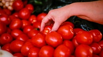 US strikes Mexican tomato trade deal in win for consumers