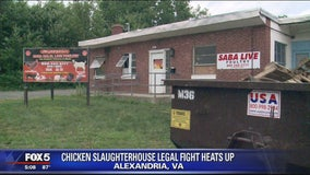 Public outrcy over chicken slaughterhouse in Alexandria