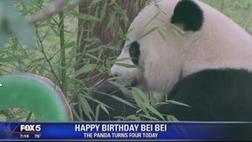 Happy Birthday Bei Bei, DC's favorite giant panda turns 4