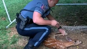 Howard County officer saves fawn from soccer net in adorable video