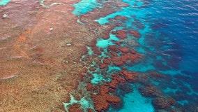 Australia lowers Great Barrier Reef outlook from 'poor' to 'very poor'