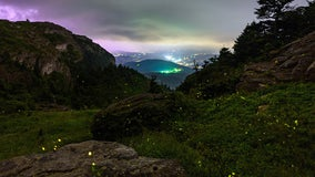 Fireflies light up in unison at Grandfather Mountain, NC State scientist finds