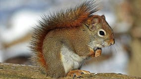 Michigan woman, 82, reportedly flips vehicle after swerving to avoid hitting squirrel