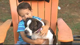 Emotional support dog reunited with Maryland family months after going missing