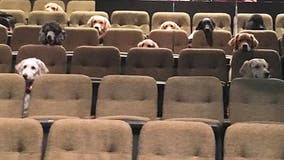 Canadian service dogs attend 'Billy Elliot' production, photo goes viral