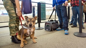 Transportation Department says airlines can ban specific dogs, but not entire breeds