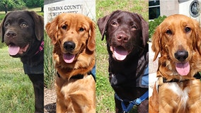 Fairfax County Police launches first service dog program to support for cops, first responders