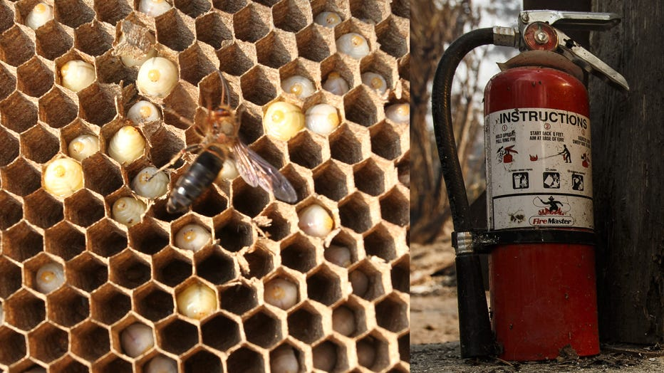 A file photo of a hornets' nest is shown, alongside a fire extinguisher. (Photo credit: Ruan Banhui/Visual China Group & Marcus Yam/Los Angeles Times via Getty Images)
