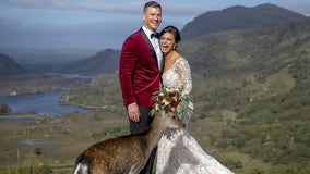 Newlyweds 'photobombed' by curious deer while posing in Killarney National Park