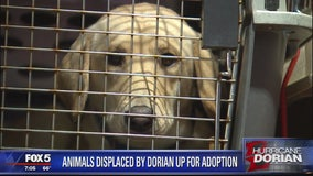 Animals displaced by Dorian up for adoption in the DMV
