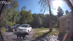 Frederick man finds bear in his front yard