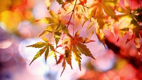 2019 Foliage Forecast: Best trees for leaf peeping
