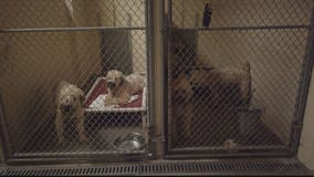 Dogs recovering, donations pouring in after raid at suspected puppy mill