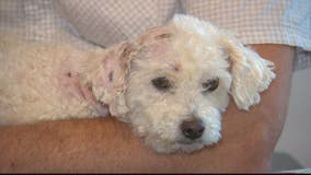 Search underway for owner of 2 dogs who attacked man and his dog in Frederick