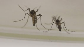 DC-area Maryland resident diagnosed with West Nile Virus