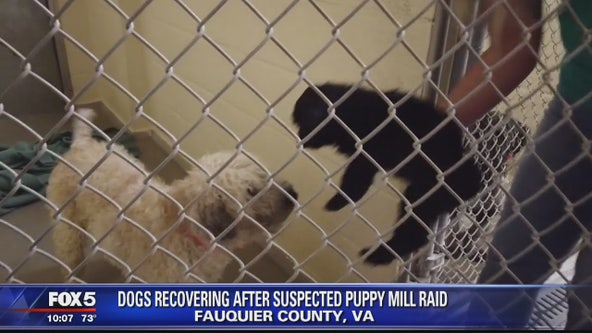 Dogs recovering after suspected puppy mill raid