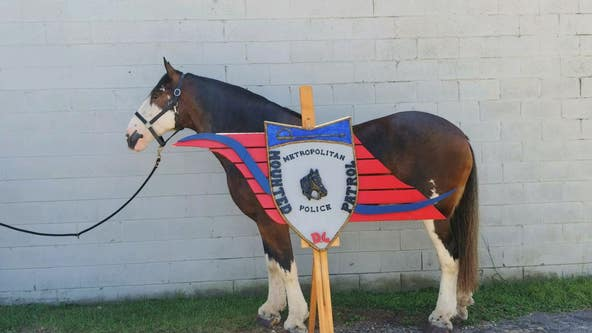 DC Police needs your help naming their newest mounted horse