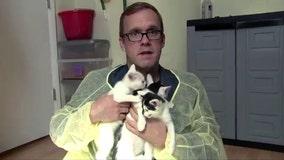 Take Tim to Work: King Street Cats