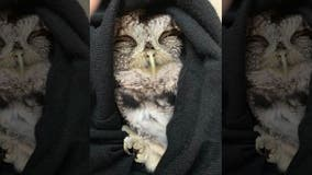 Retired Charles County police officer rescues injured owl in Dentsville