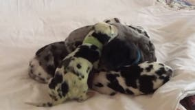 Dog gives birth to green puppy: 'It was so shocking when she was born,' owner says