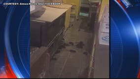 Shocking video allegedly shows rats inside Dupont Circle pizza restaurant