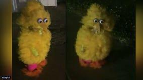 Montana boy's feathery handmade Big Bird costume is a hit on social media