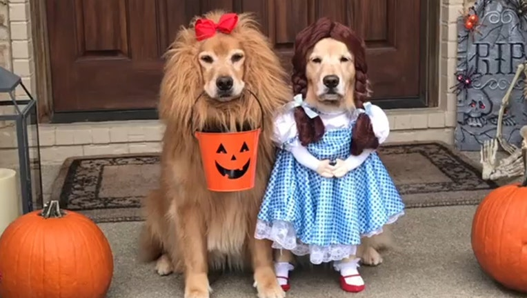 Dogs Dressed As Dorothy And The Cowardly Lion From 'The