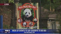 National Zoo launches week of farewell celebrations ahead of giant panda Bei Bei's departure for China